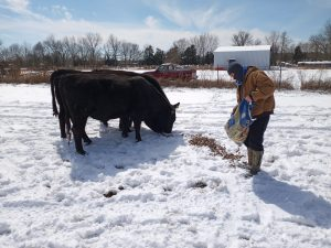 Jake Morrison, Bossier resident, works with his family to feed the cows in Snowpocalypse 2021.