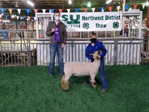 Showing sheep is a kids activity promoted by Bossier Parish 4-H.
